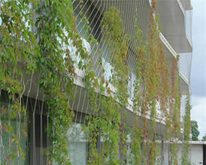 Green plants are on the stainless steel rope mesh which is outside of a building.