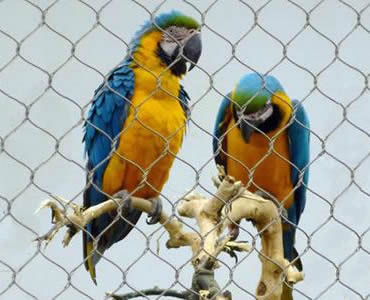 Two parrots are on a branch which is behind a piece of stainless steel knotted rope mesh.